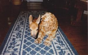 Precious and Bambi