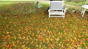 Falling leaves carpet the yard