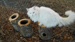 Fuzzy thinks this one would be good for squirrels!