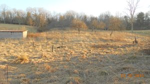 Fallen apple trees removed and sun shining on the remaining.