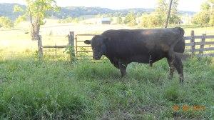 barn quilt_farm bldgs_first hay 2012_crops 048