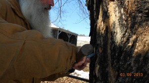 Tapping the tee in the tree good and tight so it won't leak around the hole.