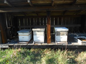 The first hive is weak but alive and the third hive is strong and working hard.