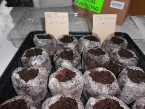 seed cups