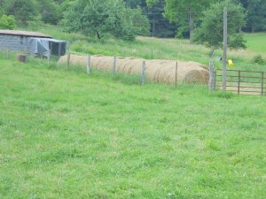 First 27 hay rolls for June 2013.  Baled and stored in the house orchard.