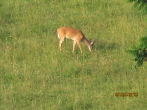 1st big buck at Heathers 06292013 (13)