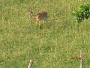 1st big buck at Heathers 06292013 (1)