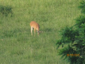 1st big buck at Heathers 06292013 (6)
