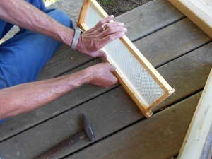Gently placing new comb in the frames.