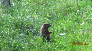 Groundhog082013 (1)