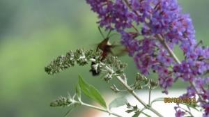 Dainty moth