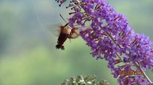 Sucking up the nectar