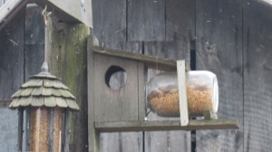 Hubby made this squirrel feeder for me years ago and I'm begging for more.