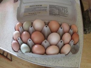 17 eggs today