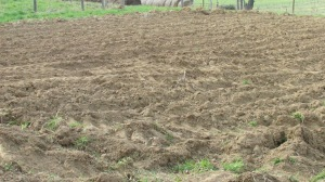 Freshly plowed garden lot
