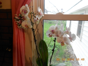 Orchid from a very special Greek friend.