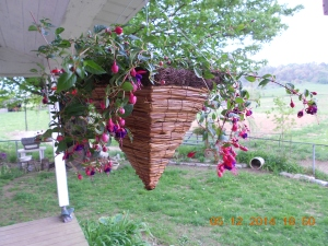 Fushia basket-basket looks like an inverted pyramid.