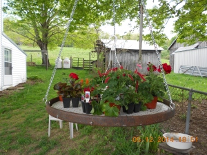 Antique wagon wheel re-purposed into a hanging flower table.