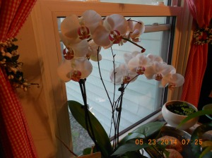 Orchid from my friend in Greece who also has a beautiful daughter.