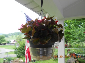 Begonia baskets from Home Depot.