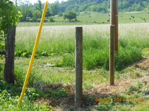 Treated posts in the ground.
