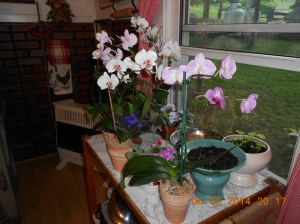 Orchids from Florida.