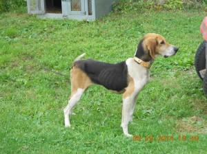Mischief-Walker hound on trial