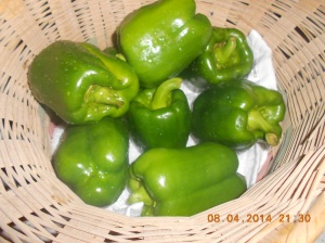 Green peppers and the plants are full of them.