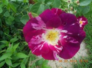 Flowers 2014 (10)