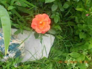Flowers 2014 (13)