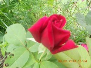 Flowers 2014 (6)