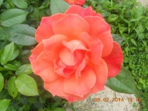 Flowers 2014 (8)