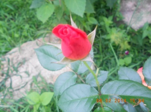 Flowers 2014 (9)