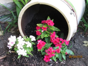 Impatiens love the shade.