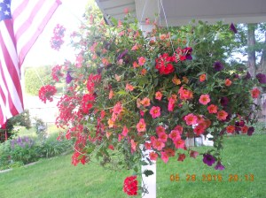 Hanging basket from my daughter