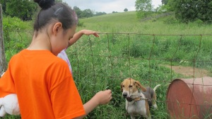 They met all the animals on the farm including the coon dogs and found out why we have them as working dogs.