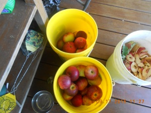 Canning apples (1)