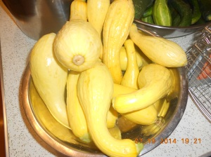 Yellow squash was sliced and vacumn packed with about 20 bags.