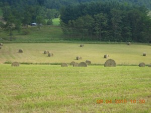 Moving haybales 5th day 2015 (9)
