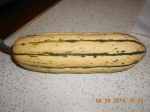 Delicata squash was harvested and I stored about 20 in the cellar.