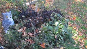 The perennials are black, wilted and almost gone.