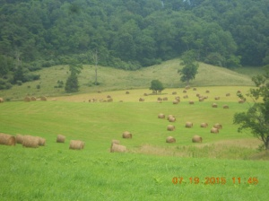 Moving hay from Snead line 07192015 (3)
