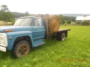 Moving hay with a 1970 truck.