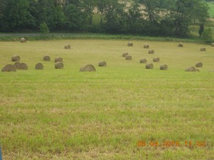 Moving haybales 5th day 2015 (16)