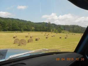 Moving haybales 5th day 2015 (18)