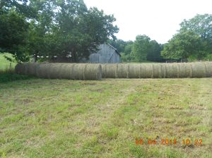 Moving haybales 5th day 2015 (4)