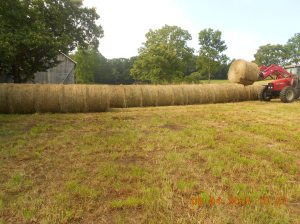 Moving haybales 5th day 2015 (5)