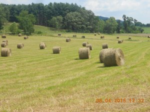 View from the truck while moving haybales 2015 (8)