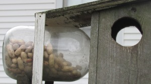 Squirrel feeder and the jar is filled with peanuts in a shell. The woodpecker breeds love these as do the cardinals.