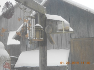 Visibility outside is almost non-existent with the wind blowing the snow but this guy found the bird/squirrel feeder.